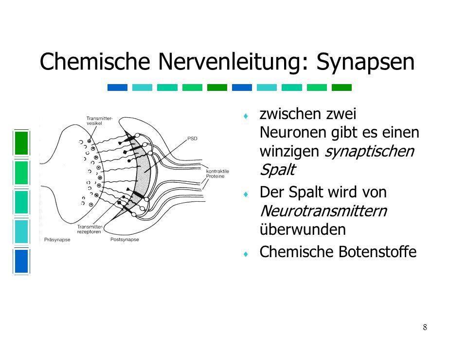 Chemische Nervenleitung: Synapsen