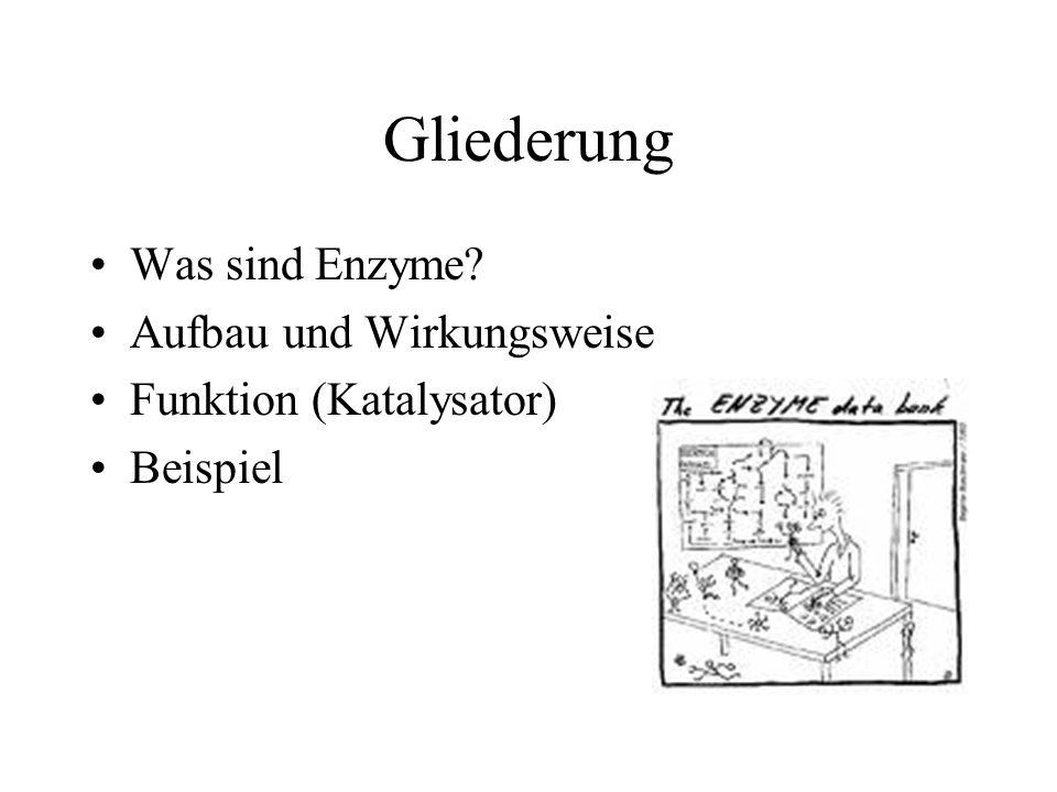 Gliederung Was sind Enzyme Aufbau und Wirkungsweise