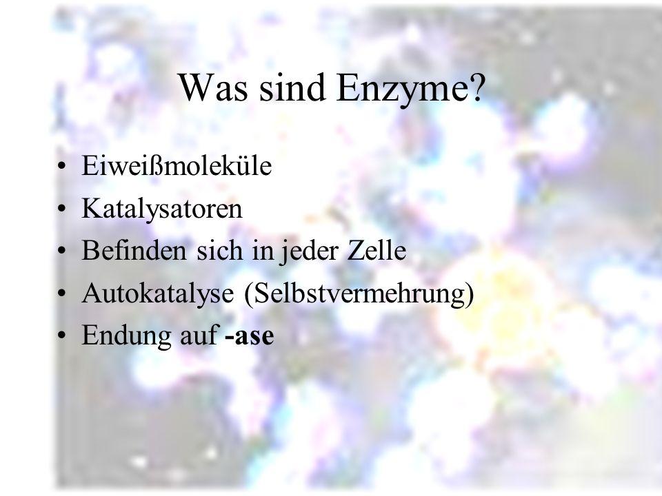 Was sind Enzyme Eiweißmoleküle Katalysatoren
