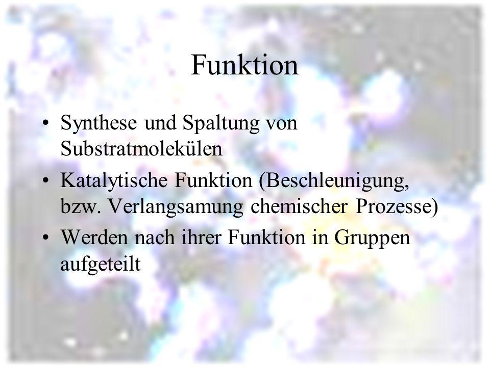 Funktion Synthese und Spaltung von Substratmolekülen