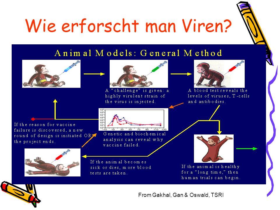 Wie erforscht man Viren