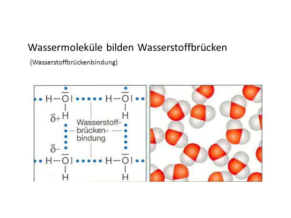 Wassermoleküle bilden Wasserstoffbrücken