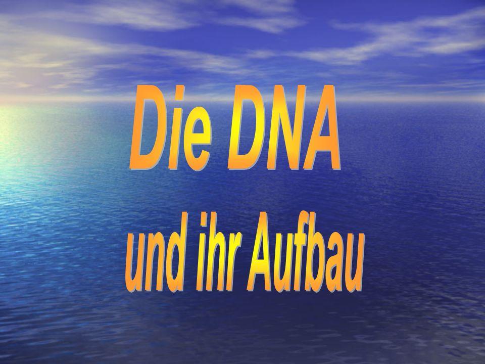 Die DNA und ihr Aufbau