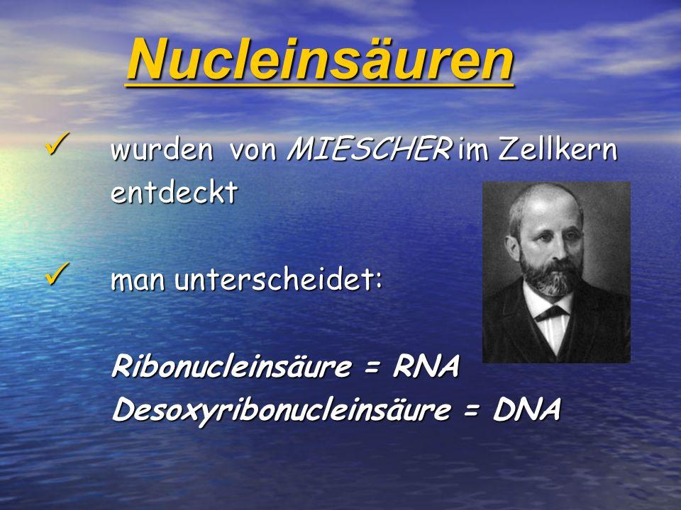 Nucleinsäuren wurden von MIESCHER im Zellkern entdeckt