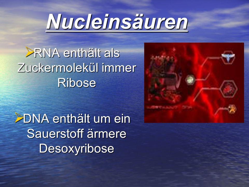 Nucleinsäuren RNA enthält als Zuckermolekül immer Ribose
