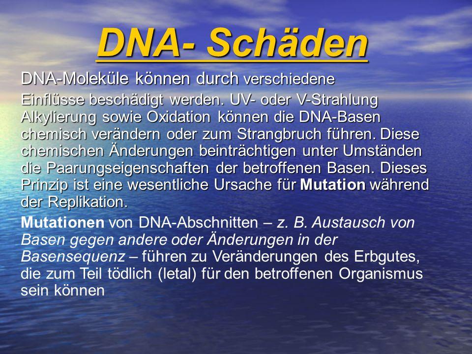DNA- Schäden DNA-Moleküle können durch verschiedene