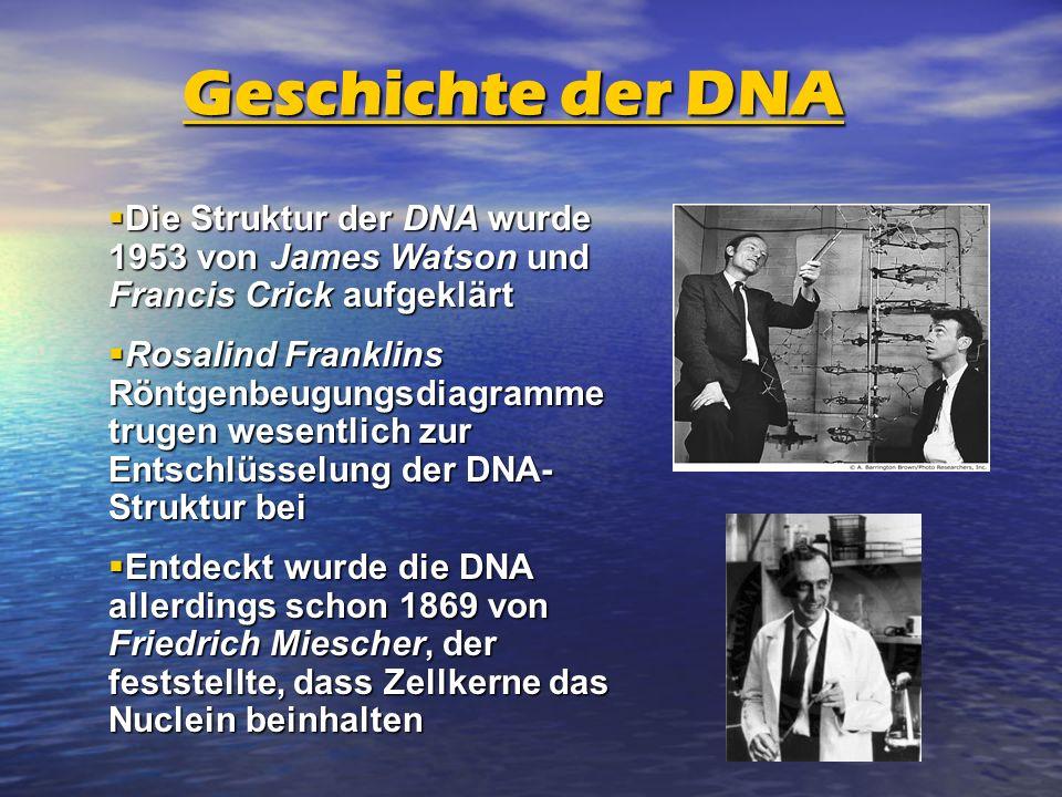 Geschichte der DNA Die Struktur der DNA wurde 1953 von James Watson und Francis Crick aufgeklärt.
