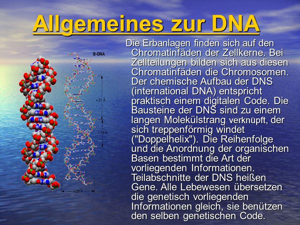 Allgemeines zur DNA
