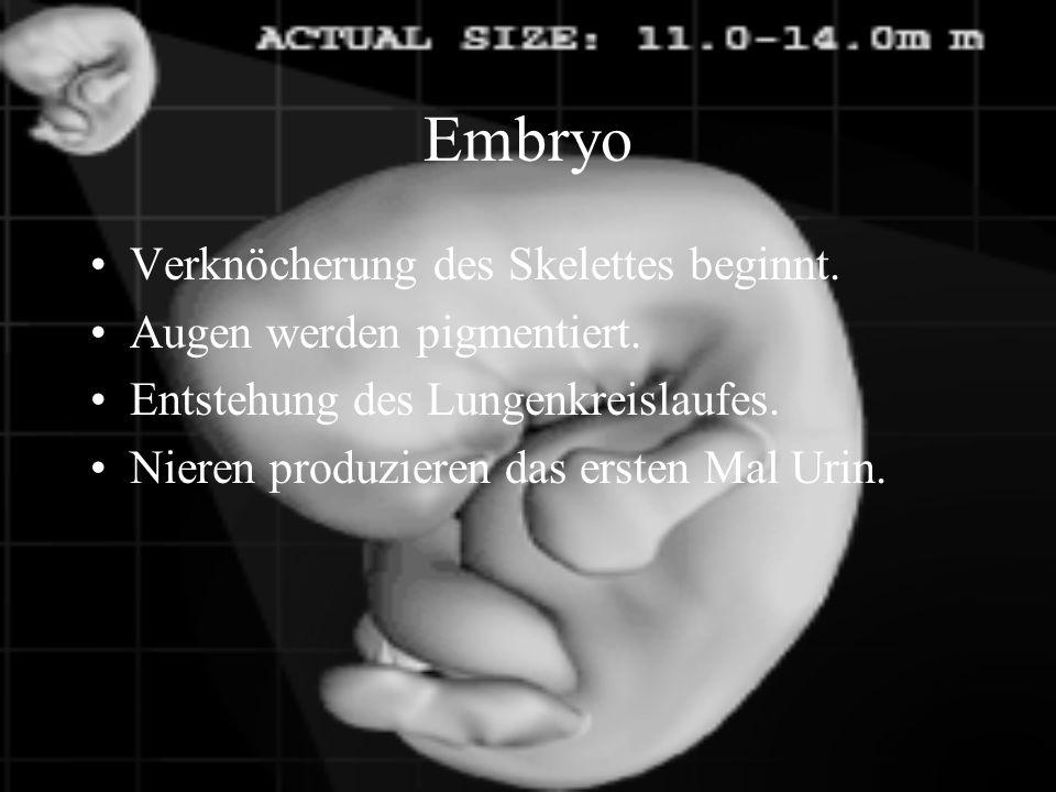 Embryo Verknöcherung des Skelettes beginnt. Augen werden pigmentiert.