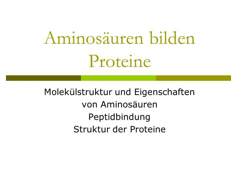 Aminosäuren bilden Proteine