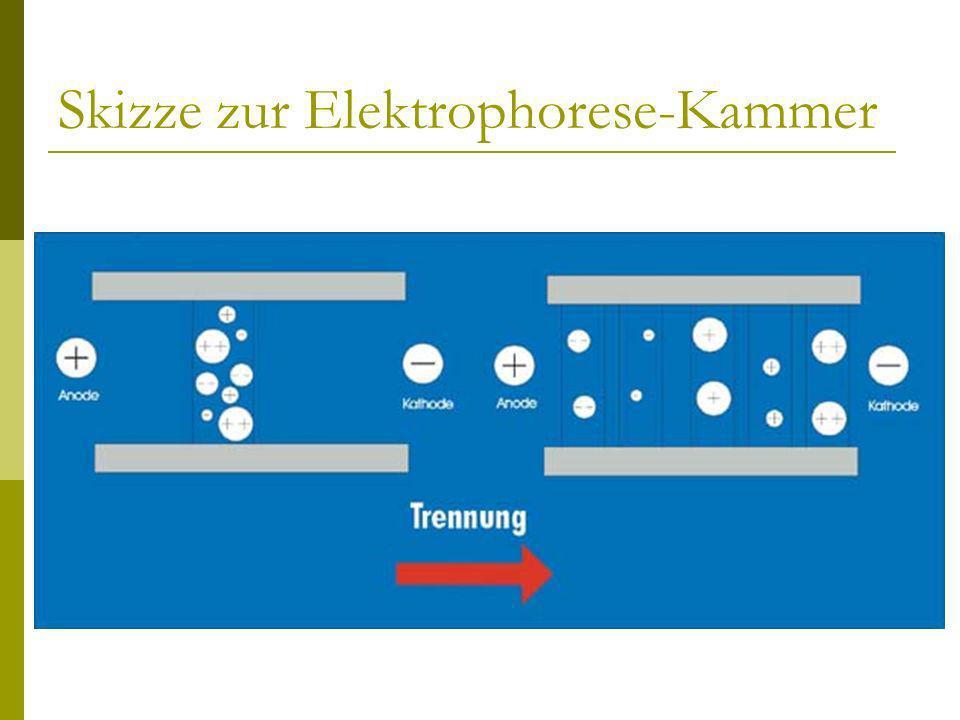 Skizze zur Elektrophorese-Kammer