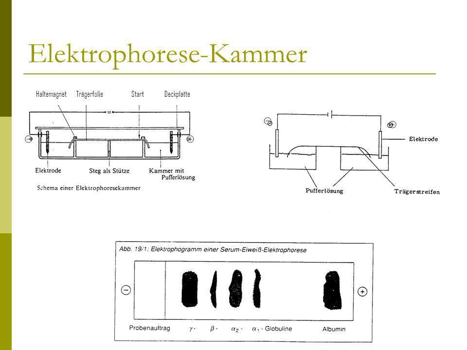Elektrophorese-Kammer