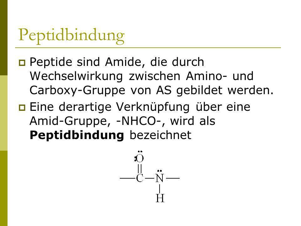 Peptidbindung Peptide sind Amide, die durch Wechselwirkung zwischen Amino- und Carboxy-Gruppe von AS gebildet werden.