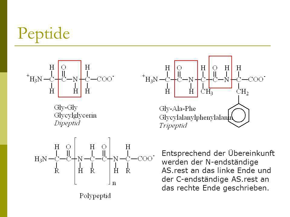 Peptide Entsprechend der Übereinkunft werden der N-endständige