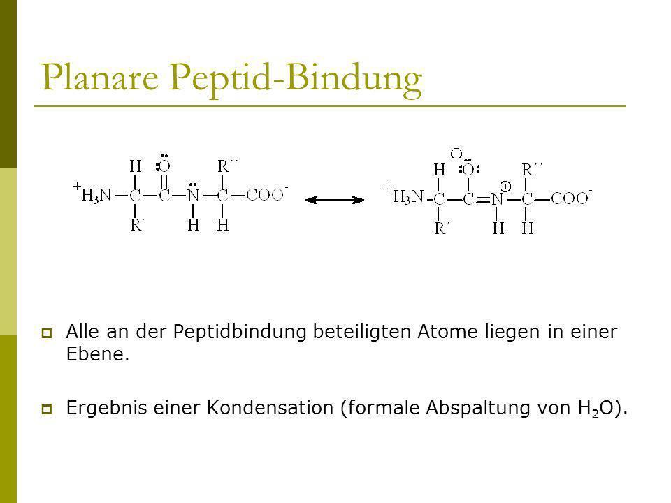 Planare Peptid-Bindung