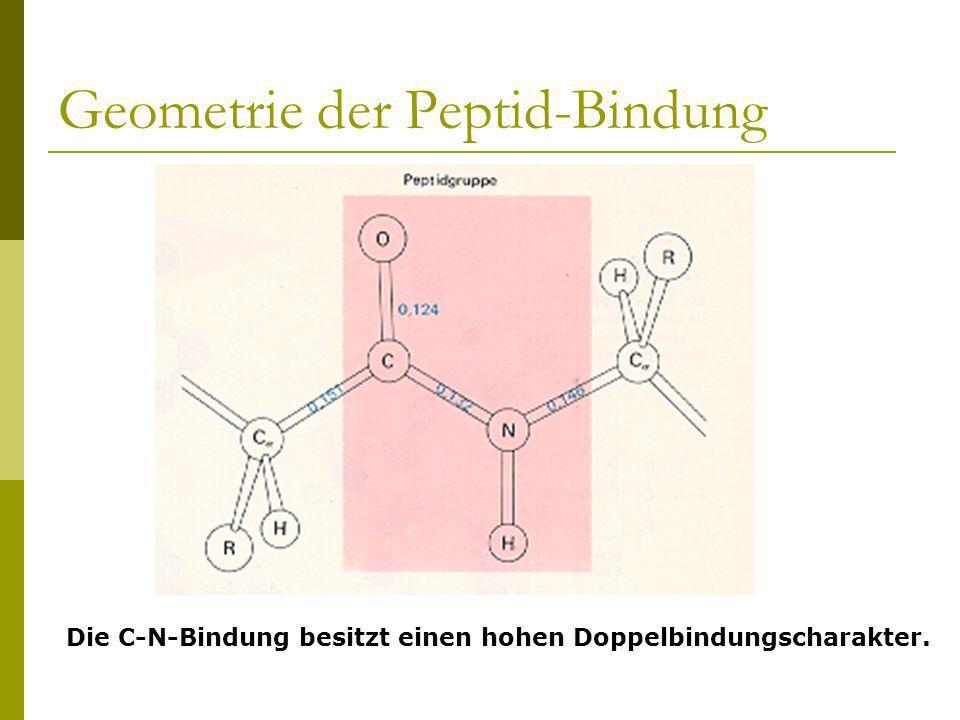 Geometrie der Peptid-Bindung