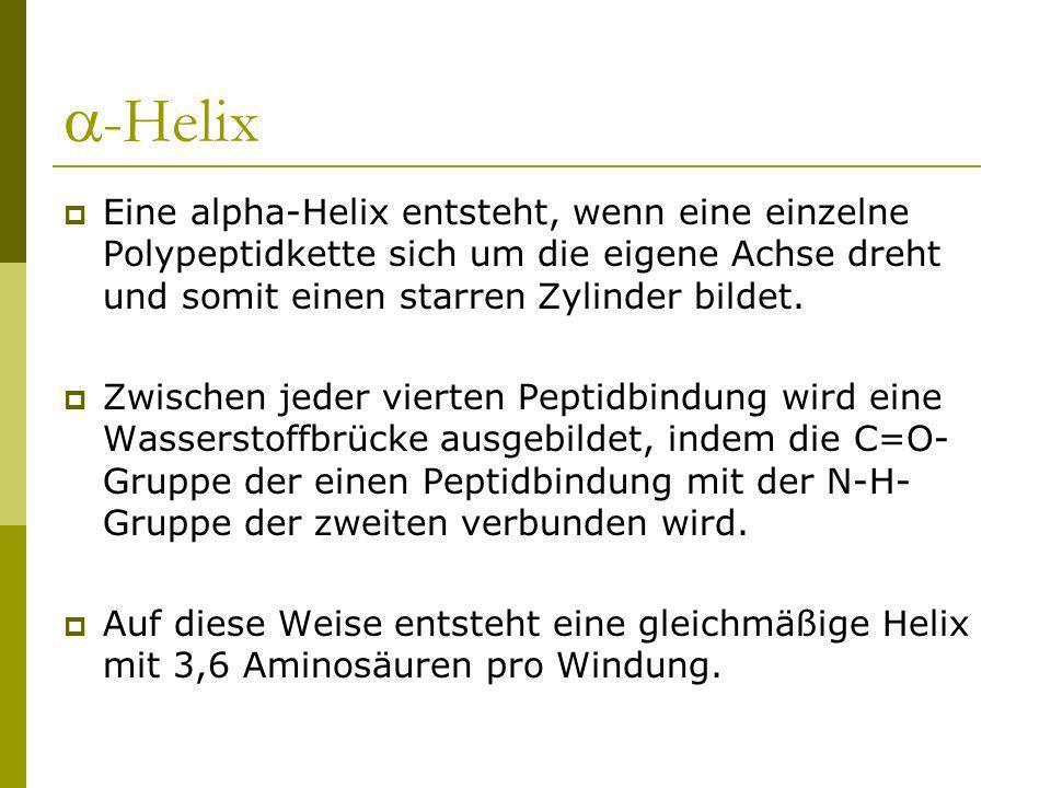 -HelixEine alpha-Helix entsteht, wenn eine einzelne Polypeptidkette sich um die eigene Achse dreht und somit einen starren Zylinder bildet.