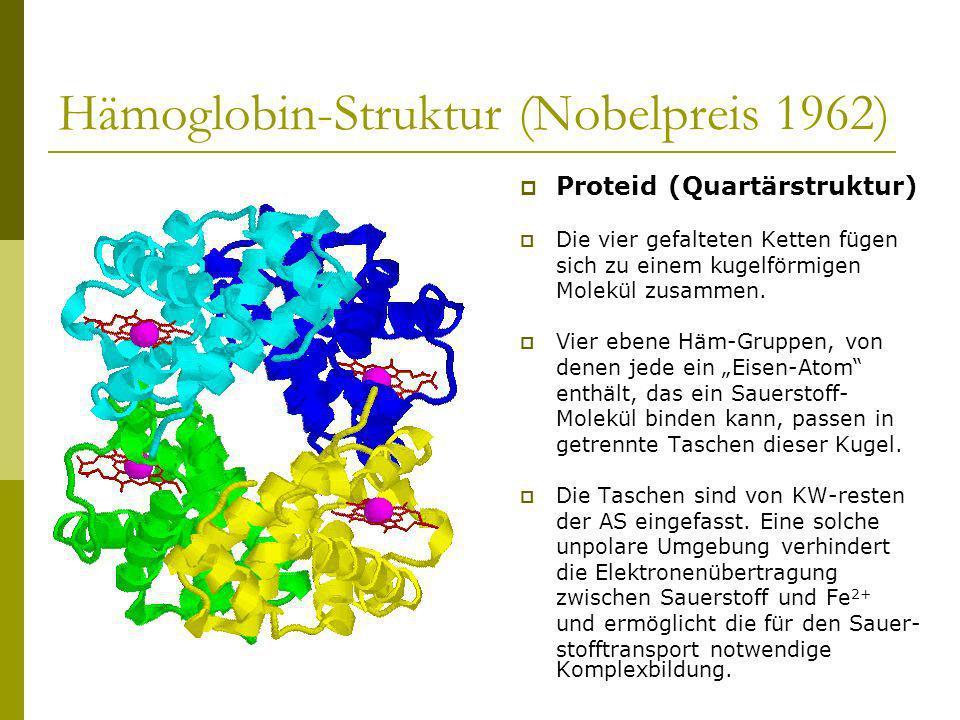 Hämoglobin-Struktur (Nobelpreis 1962)