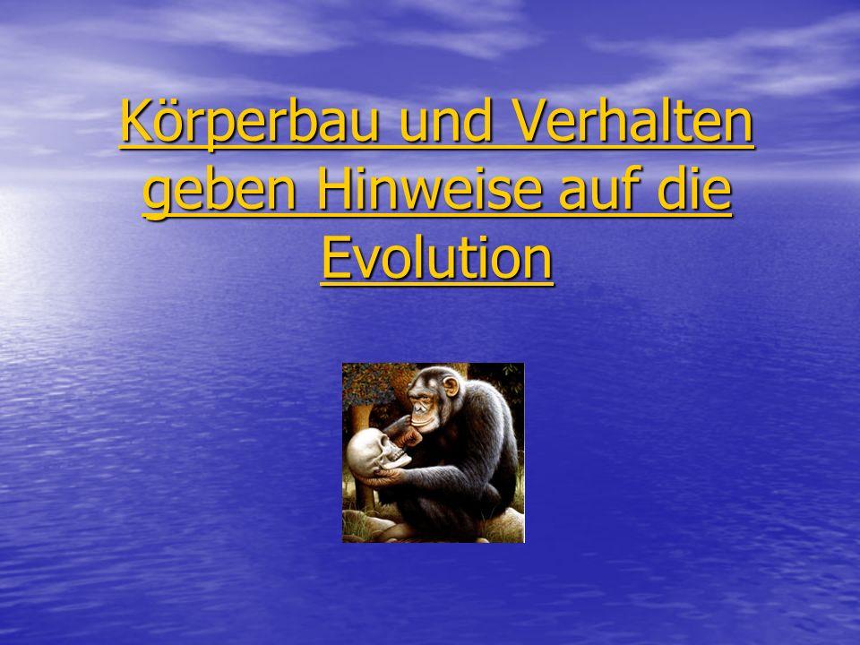 Körperbau und Verhalten geben Hinweise auf die Evolution