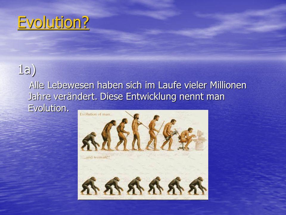 Evolution. 1a) Alle Lebewesen haben sich im Laufe vieler Millionen Jahre verändert.