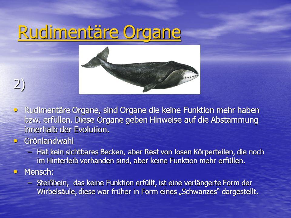 Rudimentäre Organe 2)