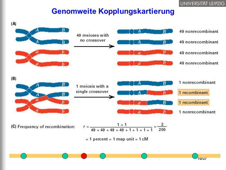 Genomweite Kopplungskartierung