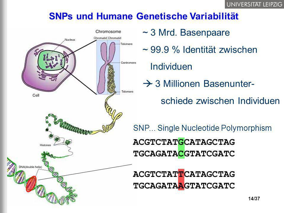 SNPs und Humane Genetische Variabilität