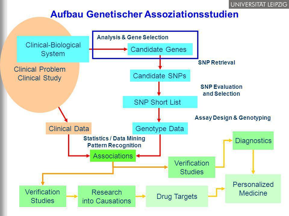 Aufbau Genetischer Assoziationsstudien