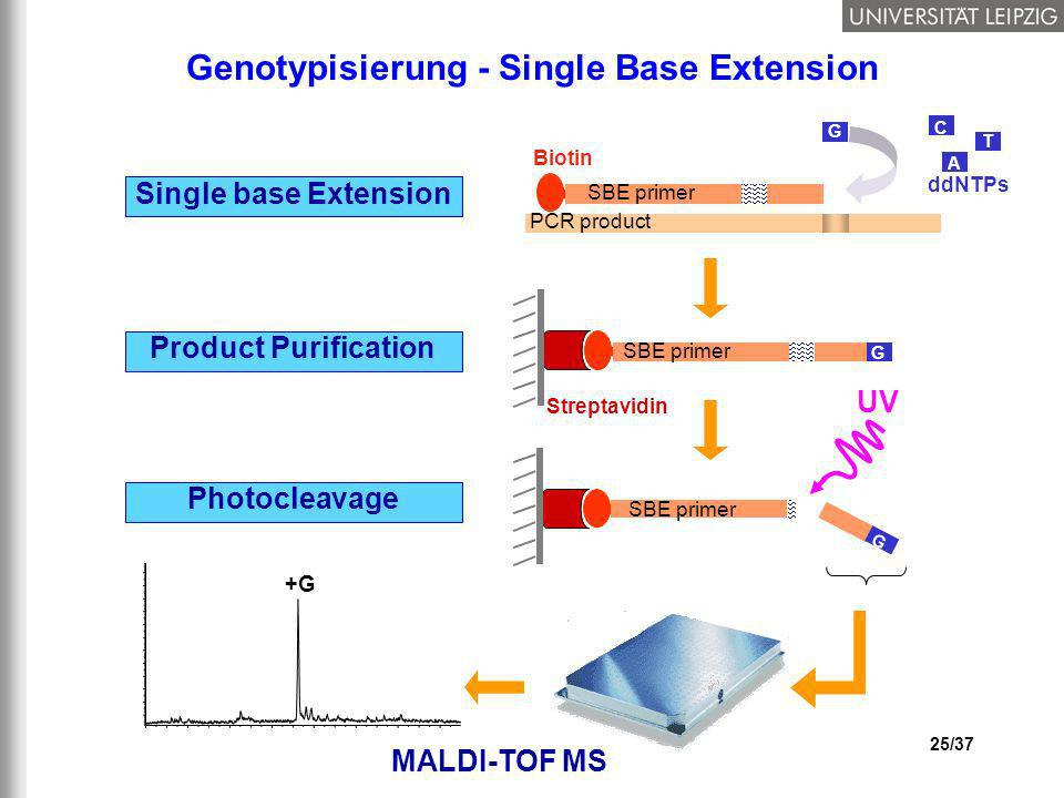 Genotypisierung - Single Base Extension