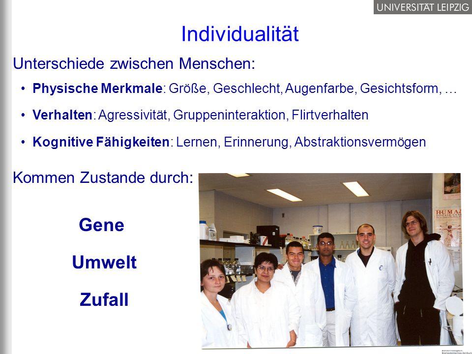Individualität Gene Umwelt Zufall Unterschiede zwischen Menschen: