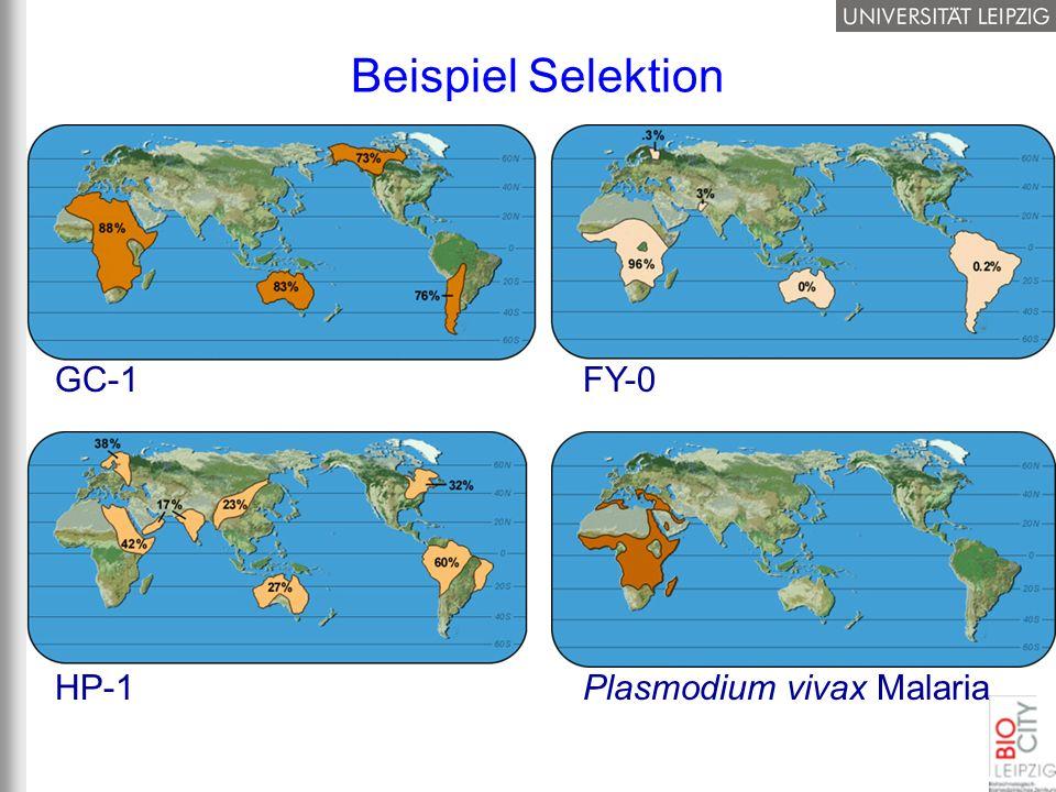 Beispiel Selektion GC-1 FY-0 Plasmodium vivax Malaria HP-1