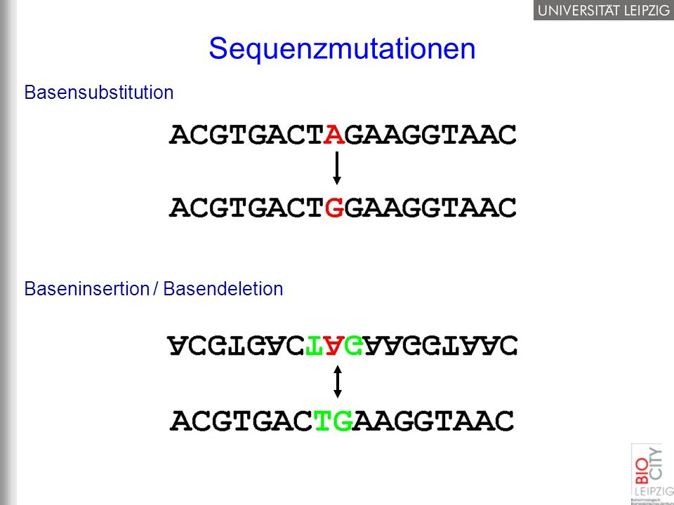 Sequenzmutationen Basensubstitution Baseninsertion / Basendeletion