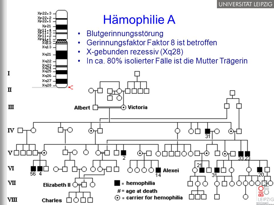 Hämophilie A Blutgerinnungsstörung