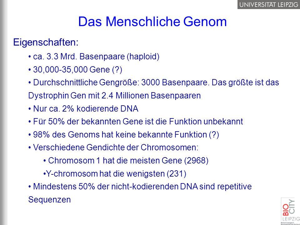 Das Menschliche Genom Eigenschaften: ca. 3.3 Mrd. Basenpaare (haploid)