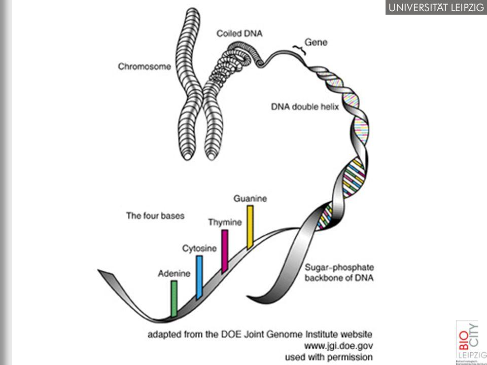 Das Menschliche Genom