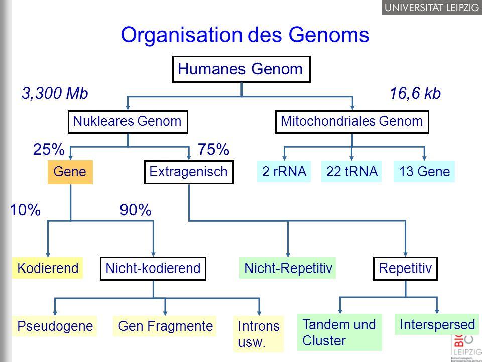 Organisation des Genoms