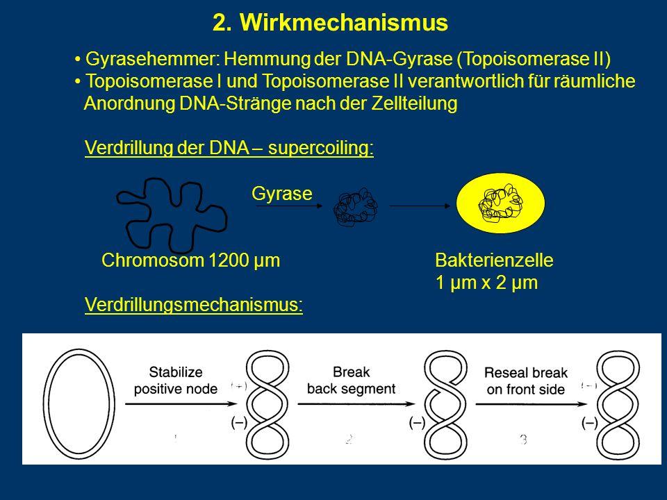 2. Wirkmechanismus Gyrasehemmer: Hemmung der DNA-Gyrase (Topoisomerase II) Topoisomerase I und Topoisomerase II verantwortlich für räumliche.