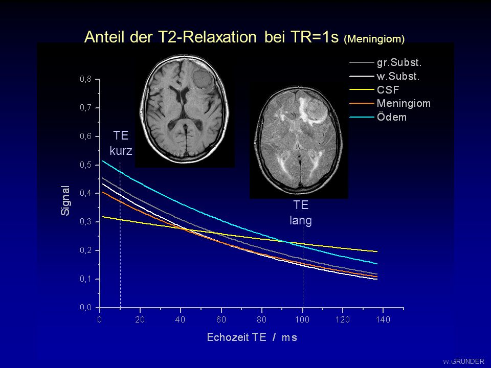 Anteil der T2-Relaxation bei TR=1s (Meningiom)