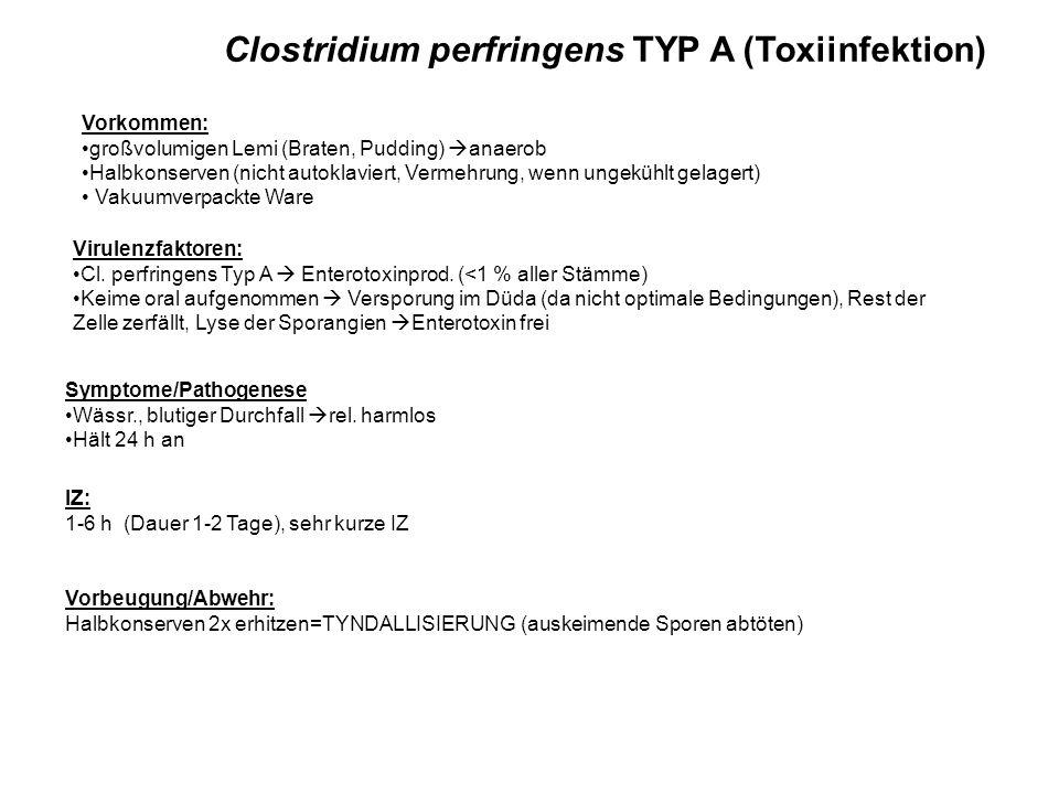 Clostridium perfringens TYP A (Toxiinfektion)