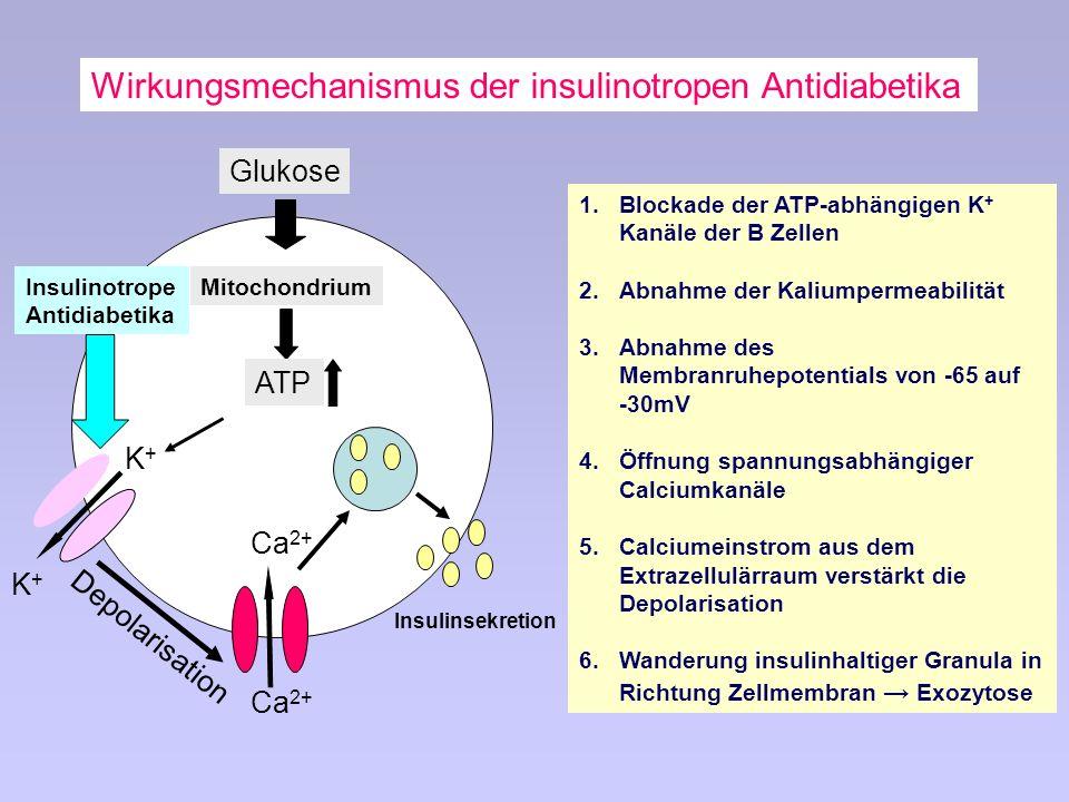 Wirkungsmechanismus der insulinotropen Antidiabetika