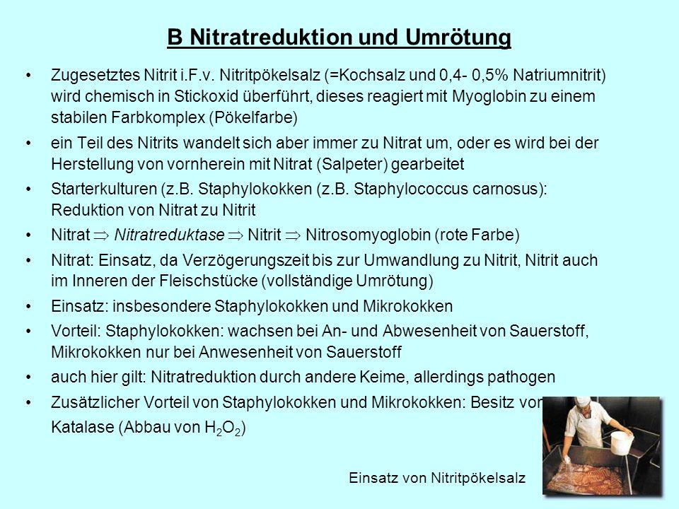 B Nitratreduktion und Umrötung
