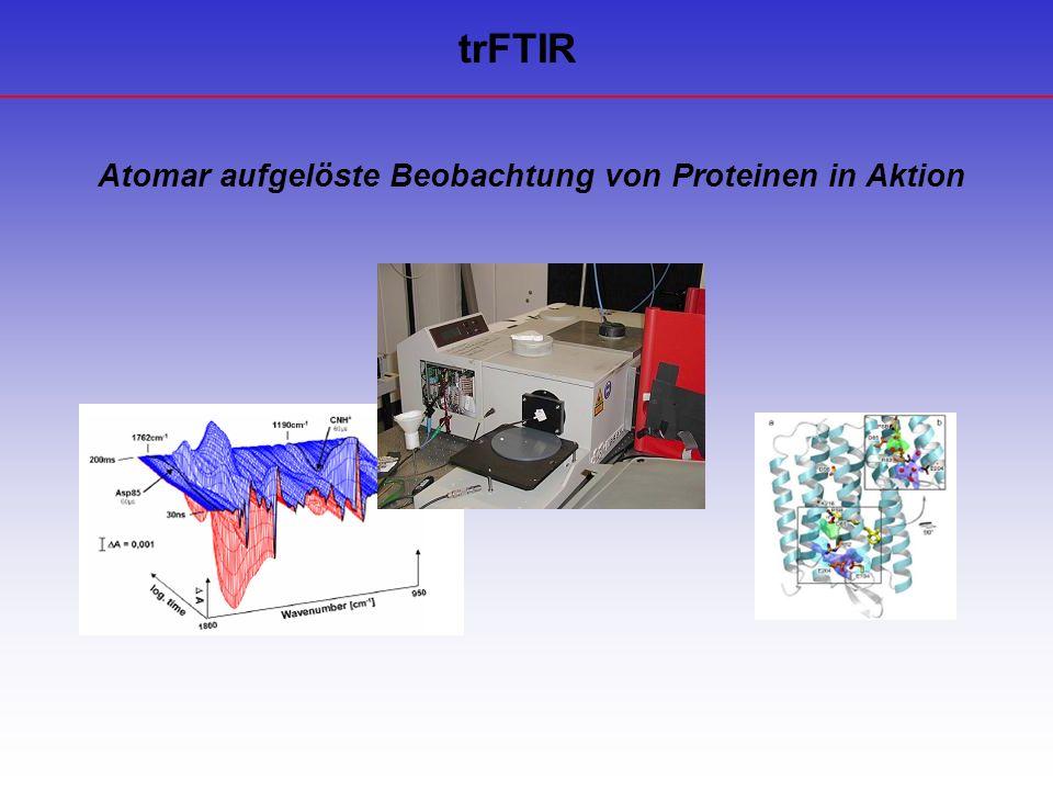 Atomar aufgelöste Beobachtung von Proteinen in Aktion