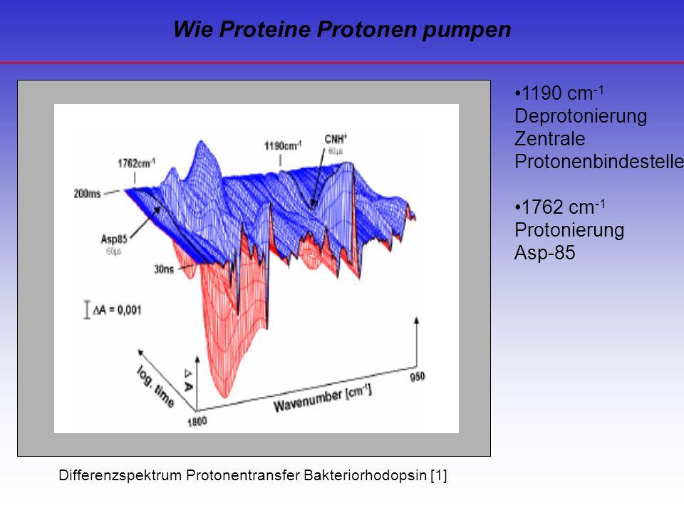 Wie Proteine Protonen pumpen