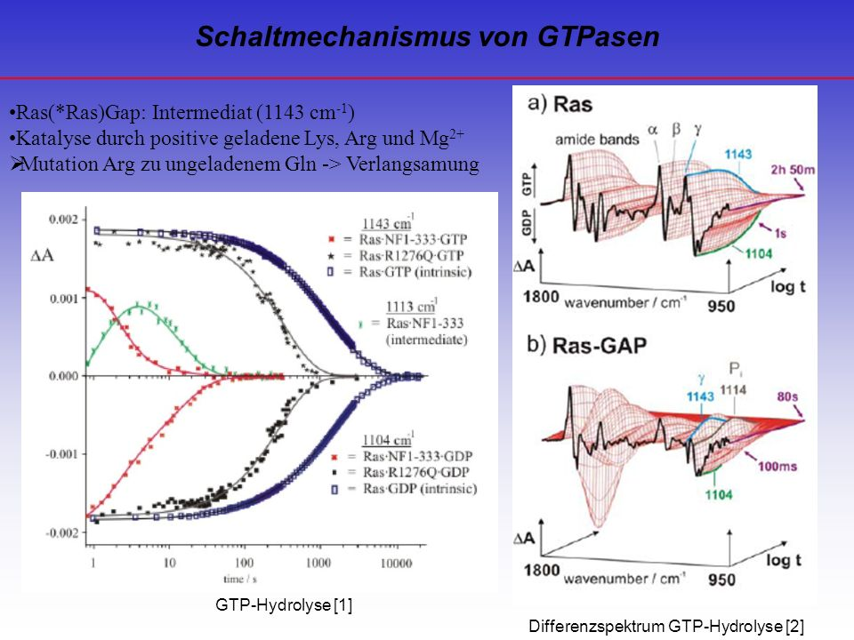 Schaltmechanismus von GTPasen