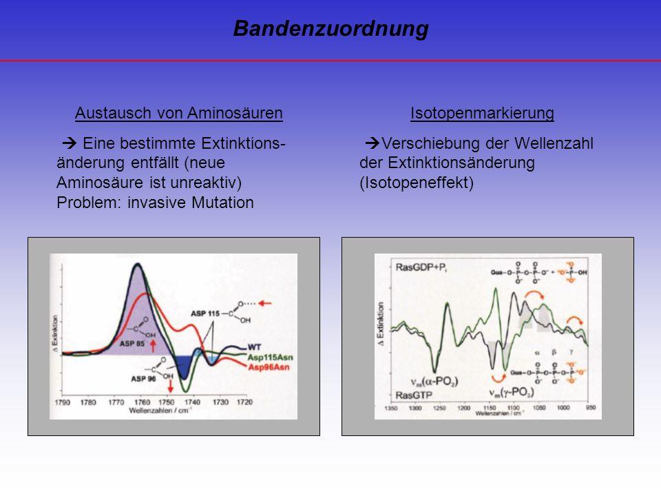 Austausch von Aminosäuren