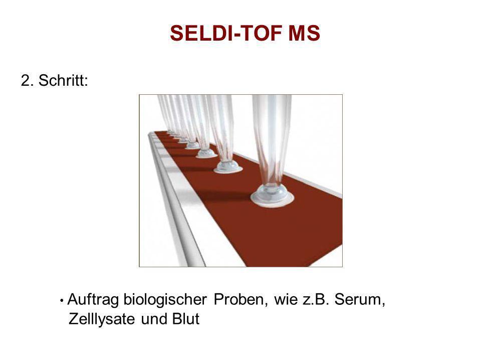 SELDI-TOF MS 2. Schritt: Zelllysate und Blut