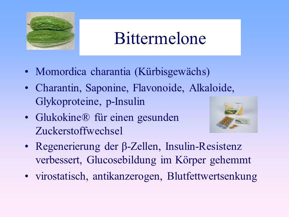 Bittermelone Momordica charantia (Kürbisgewächs)