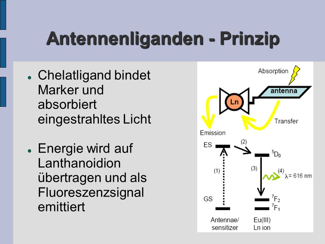 Antennenliganden - Prinzip