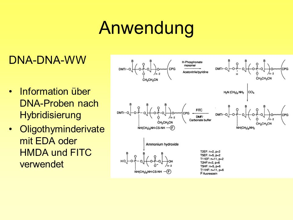 Anwendung DNA-DNA-WW Information über DNA-Proben nach Hybridisierung