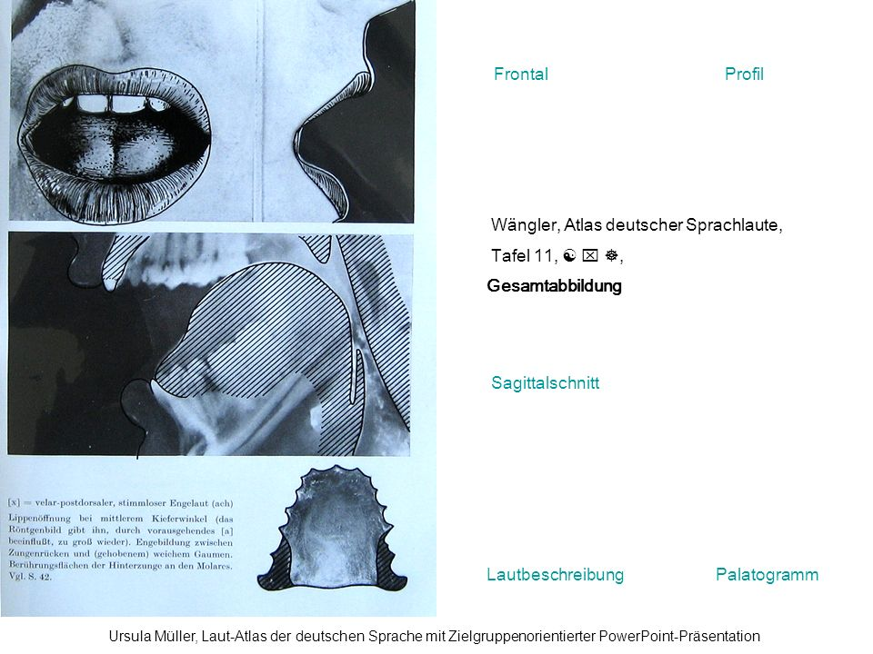 Wängler, Atlas deutscher Sprachlaute, Tafel 11,   , Gesamtabbildung